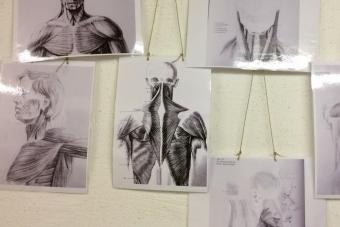 Anatomievorlagen